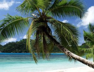 Seychelles plage palmiers